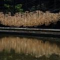 Kumpel, Wassergarten Reden 2018